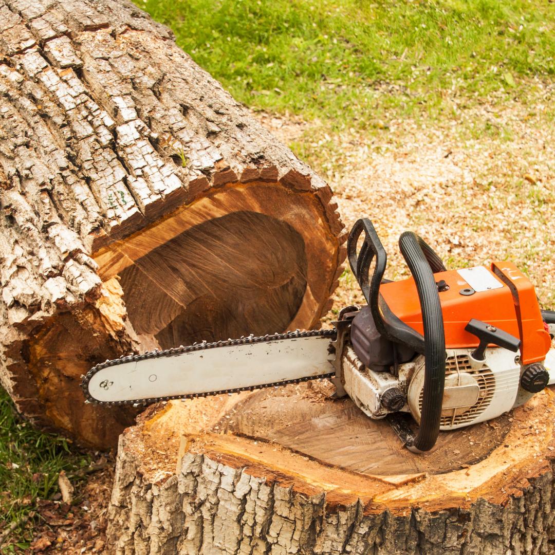 chainsaw sitting on a tree stump